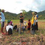Mengenal Pestisida Kimia Pada Pertanian