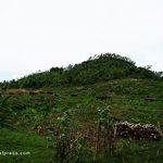 Memahami Makna SAVE OUR FOREST Di Atas Selembar Kertas