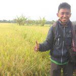 Petani Muda; Mengenal Penyakit Pada Tanaman Padi